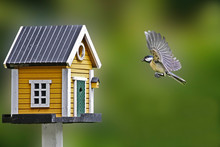 Close-up Of Great Tit Flying By Birdhouse