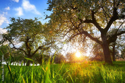Fotografia Setting sun framed by two trees on a green meadow with blades of grass in the fo