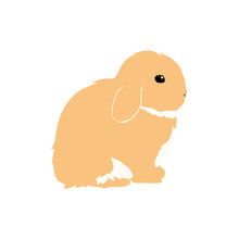 Cute Bunny Rabbit Isolated On ...