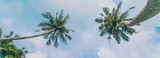 Coconut trees on the island. Selective focus.