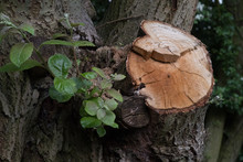 Close-up Of Tree Stump In Forest