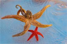 The Starfish, Seashells And Se...