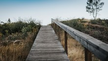 Wooden Walkway Going Through A Field Of Grass And Trees