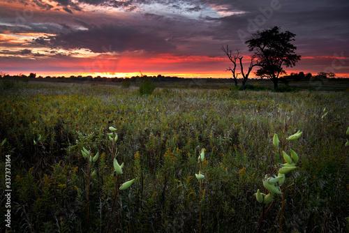 Fotografie, Tablou Deep red sunset colors over a summer prairie landscape