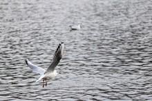 Closeup Shot Of A Gull Flying ...