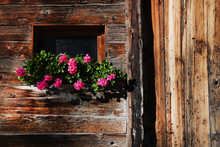 Flowers Blooming On Window Box Of Log Cabin