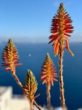 Fleurs Et La Mer