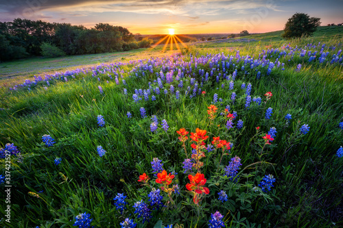 Obraz na plátně Texas Bluebonnets at Sunset