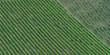 Weinberge - Reihen von Reben - Textur
