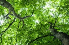 Full Frame Shot Of Tree Canopy...