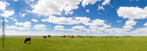 Photo Panoramic View Of Animals Grazing On Field Against Sky