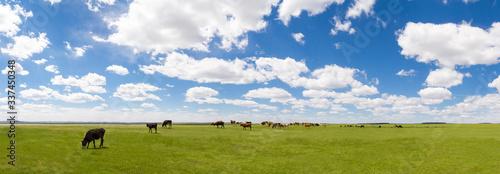 Fotografija Panoramic View Of Animals Grazing On Field Against Sky
