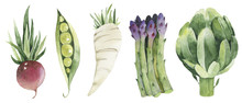 Set Of Fresh Vegetables White Paper White Paper