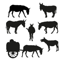 Set Of Vector Silhouettes Of A Donkey In Various Poses.