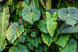 floral  exotic plants foliage background