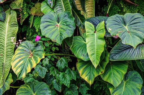 Obraz floral  exotic plants foliage background - fototapety do salonu