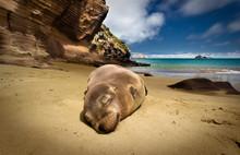 Sea Lion Sleeping On Sand At Beach Against Sky