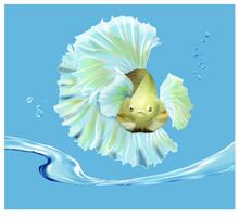Vector,Betta Fish, Siamese Fi...