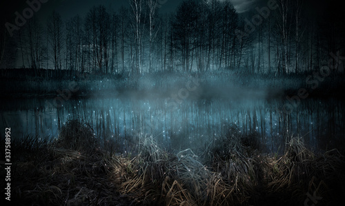 Fototapeta Dark gloomy forest. Night in the forest. obraz