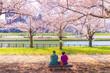 河川敷の桜 ベンチに座る老夫婦