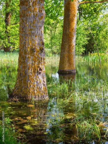 Two flooded poplar trunks in the Salburua wetlands, a city park biotope in Vitor Fototapete