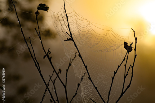 Canvas Close-up Of Spider On Web Against Sky During Sunset