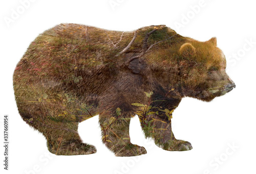 double exposure silhouette of a brown bear against the background of a forest stream and grass