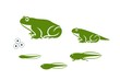 Stages of frogs life cycle. Abstract frog on white background.