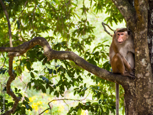 Photo SRI LANKA