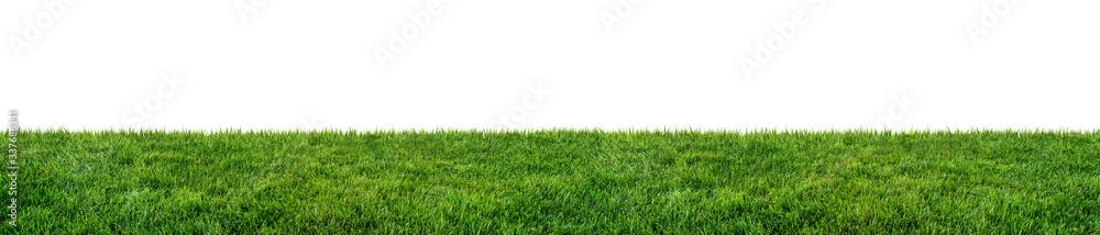 Fototapeta green grass field isolated on white background