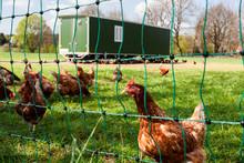 Mobiler Hühnerstall Für Freilandhaltung