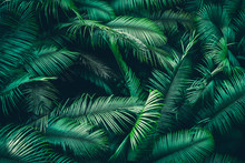 Beautiful Tropical Forest With...