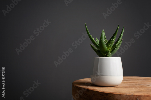 aloe vera plant on a wooden in a gray porcelain pot against a dark gray wall Canvas Print