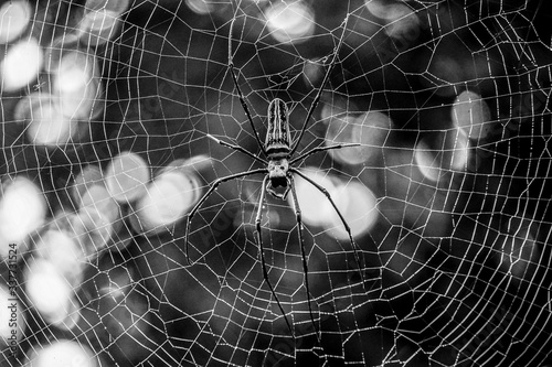 Fotografía Close-up Of Spider On Web