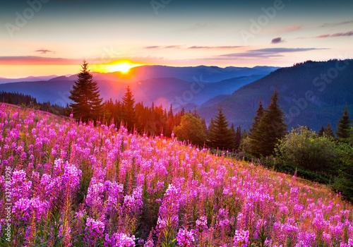 Fototapety, obrazy: Purple Flowers On Landscape Against Sky