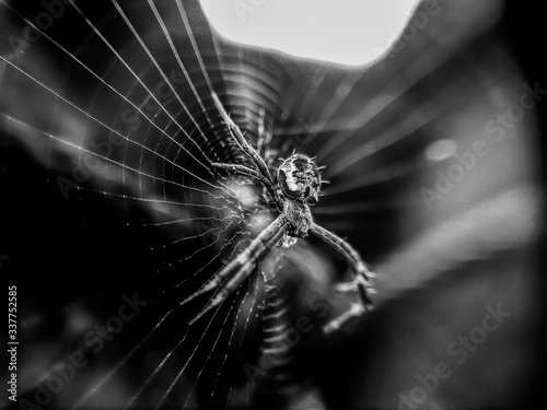 Foto Close-up Of Spider On Web