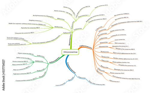 Coronavirus taxonomy diagram with  2019-ncov virus classification - vector desig Wallpaper Mural