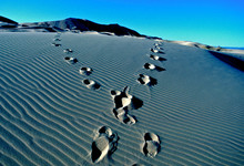 Two Tracks Diverge On Sand Dun...