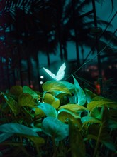 Close-up Of Neon Butterfly Perching On Plant