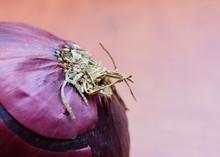 Closeup Shot Of An Onion Head ...