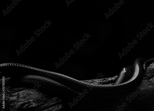 Stampa su Tela High Angle View Of Snakes On Wood Against Black Background