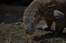 Close-up Of Komodo Dragon On L...