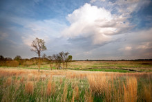 Prairie Grasses Glow In Sunset...