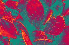 Tropical Cactus. Neon Colors. ...