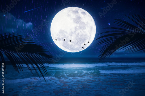 Full moon with star fall and birds flying at tropical beach abstract background. Travel vacation freedom and nature environment concept.