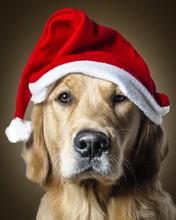 Close-up Portrait Of Golden Retriever Wearing Santa Hat Against Beige Background