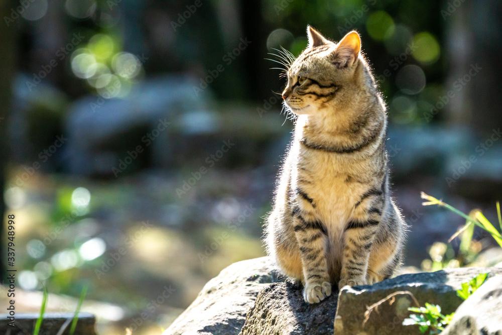 Fototapeta 野良猫のポートレート