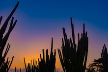 Silhouette Cactus On Land Against Sky During Sunset