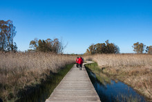 Hikers Cross A Footbridge Over A Marshy Area Of The Vendicari Nature Reserve, Syracuse, Italy