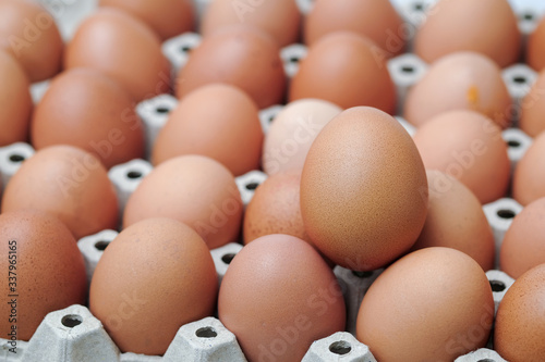 Fototapety, obrazy: Brown chicken egges on white background.